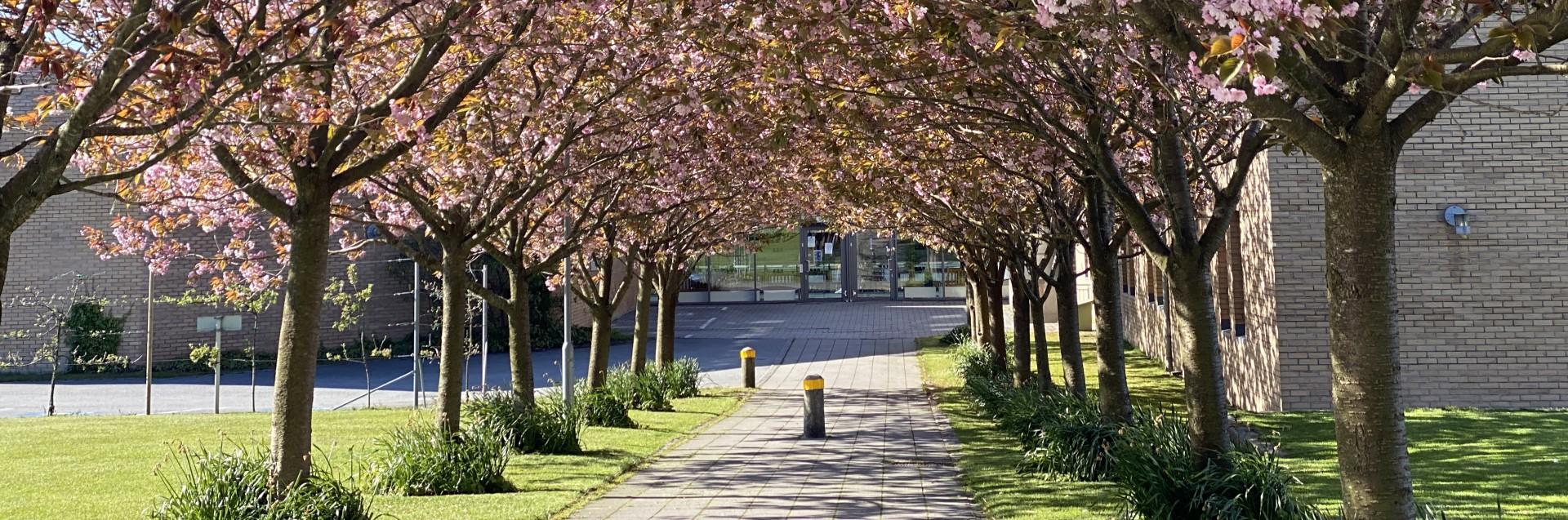 Ullandhaug campus