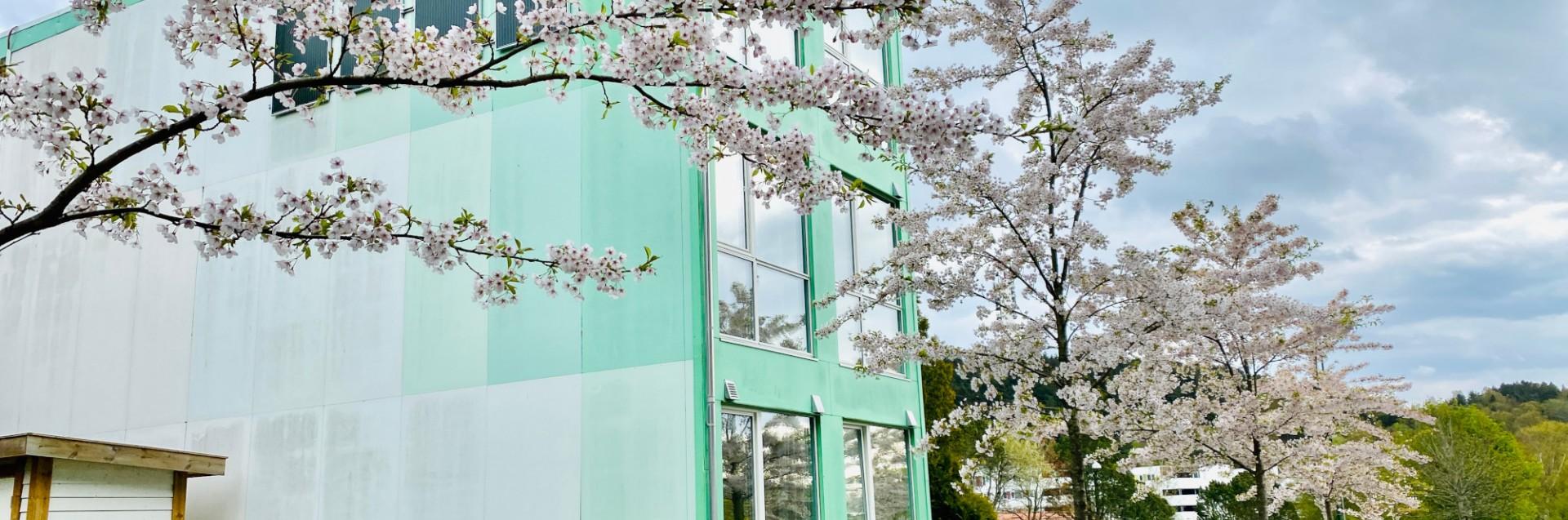 Grønn box campus