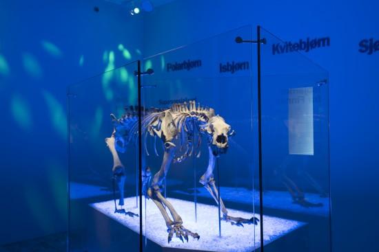 Bilde av isbjørnen utstilt på Arkeologisk museum