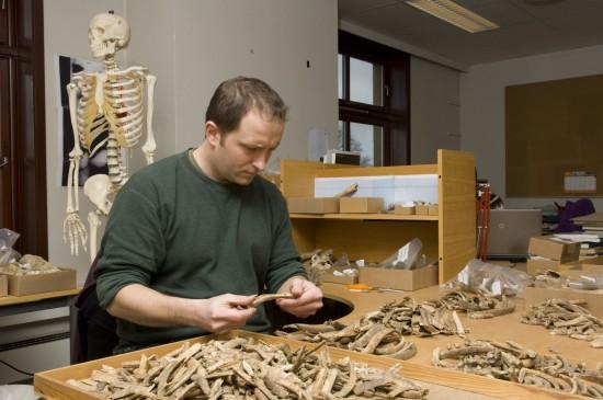 Sean Dexter Denham sorterer skjeletter