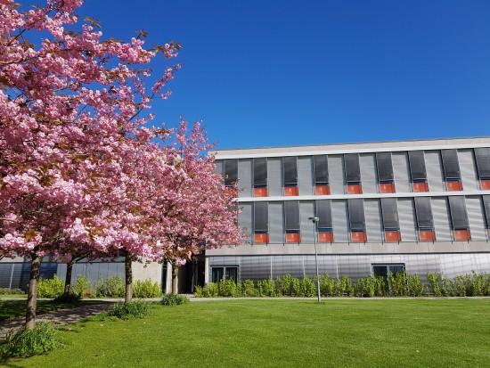 Bygning, blomstrende trær, plen og blå himmel