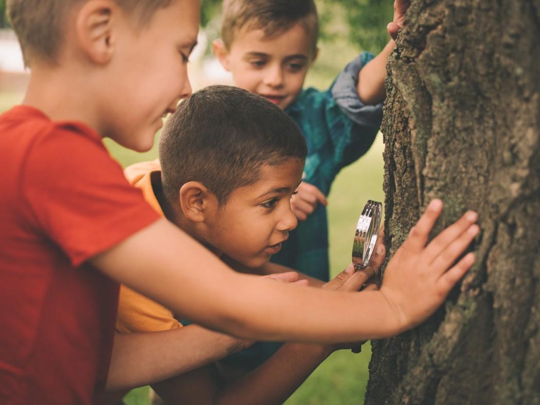 elever med forstørrelsesglass undersøker tre. foto: Getty